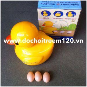 Vịt vàng đẻ trứng Abbott